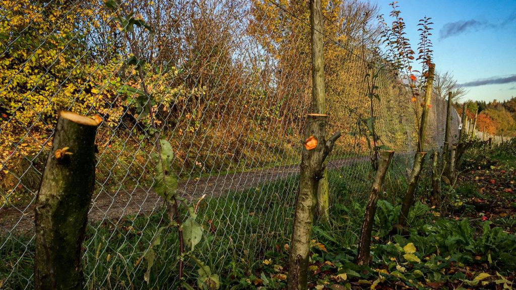 Apfelbäume abrasiert