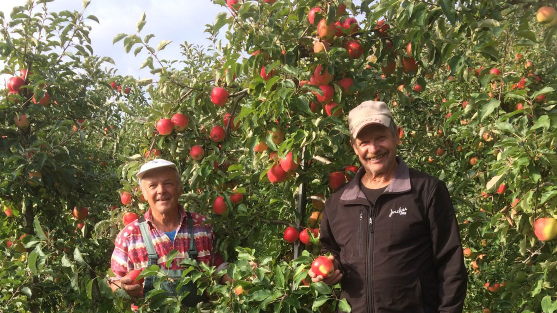 Apfelernte Juckerhof