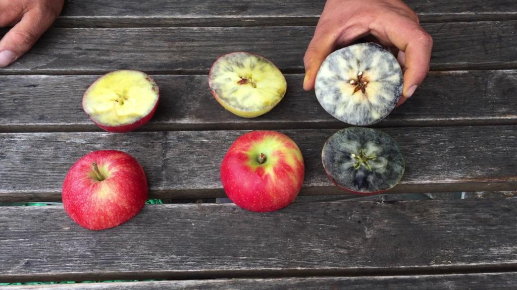 Apfelernte Jodtest
