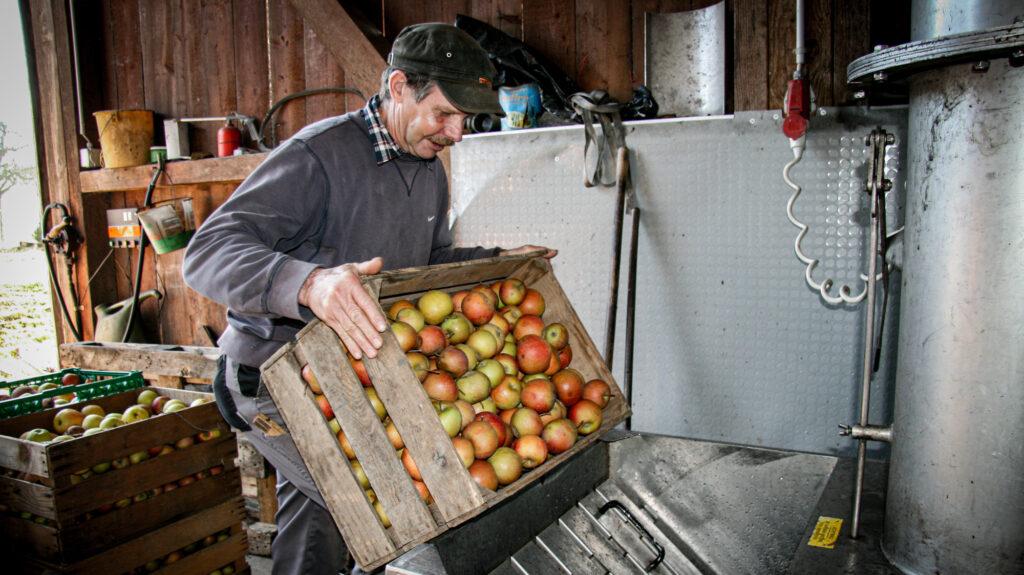 Apfelmost Produktion