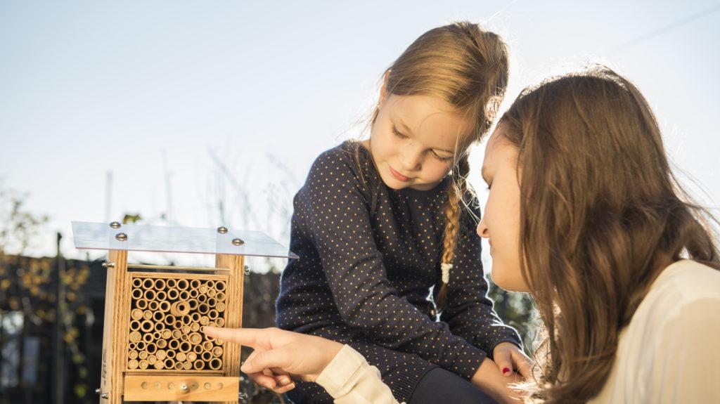 Beim Beobachten Der Wildbienen
