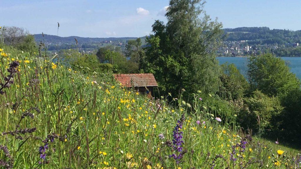 Bienenhaus hinter Blumenwiese