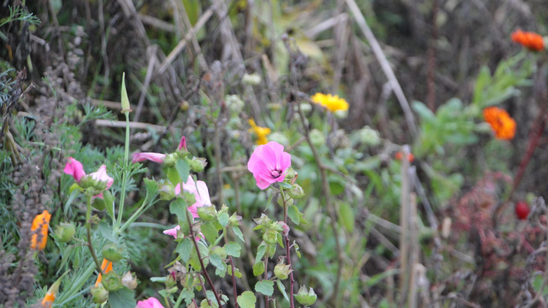 Biodiversität Blumen Rafz
