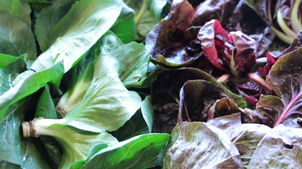 Cicorino Verde Und Verde Rosso