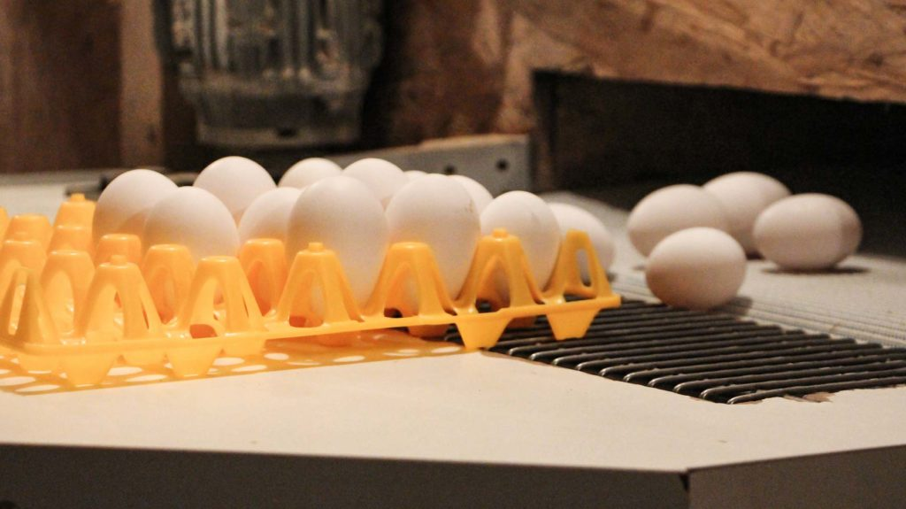 Eier bei Ausgabestelle