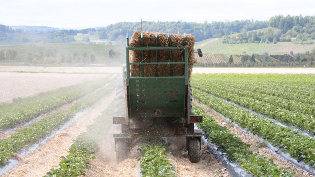Erdbeere Stroh Traktor