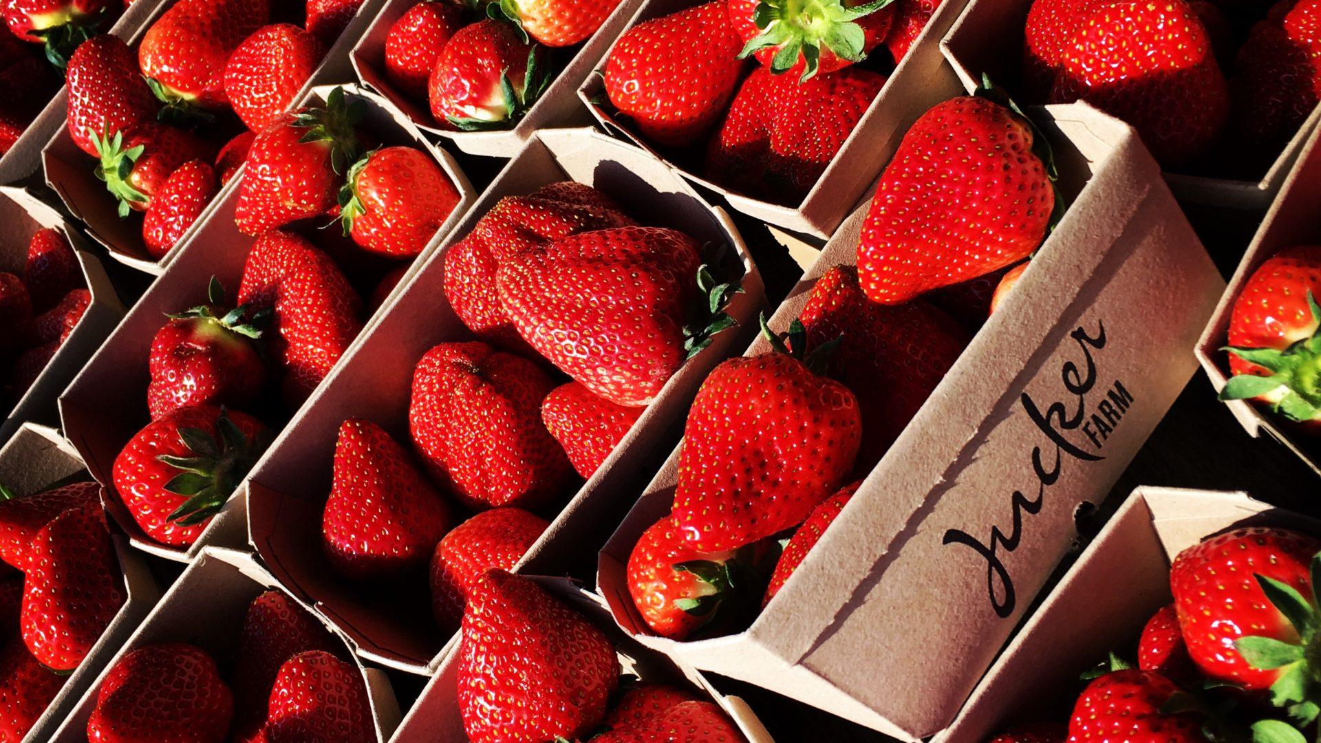 Jucker Farm Erdbeer-Schalen