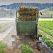 Erdbeerfeld Traktor