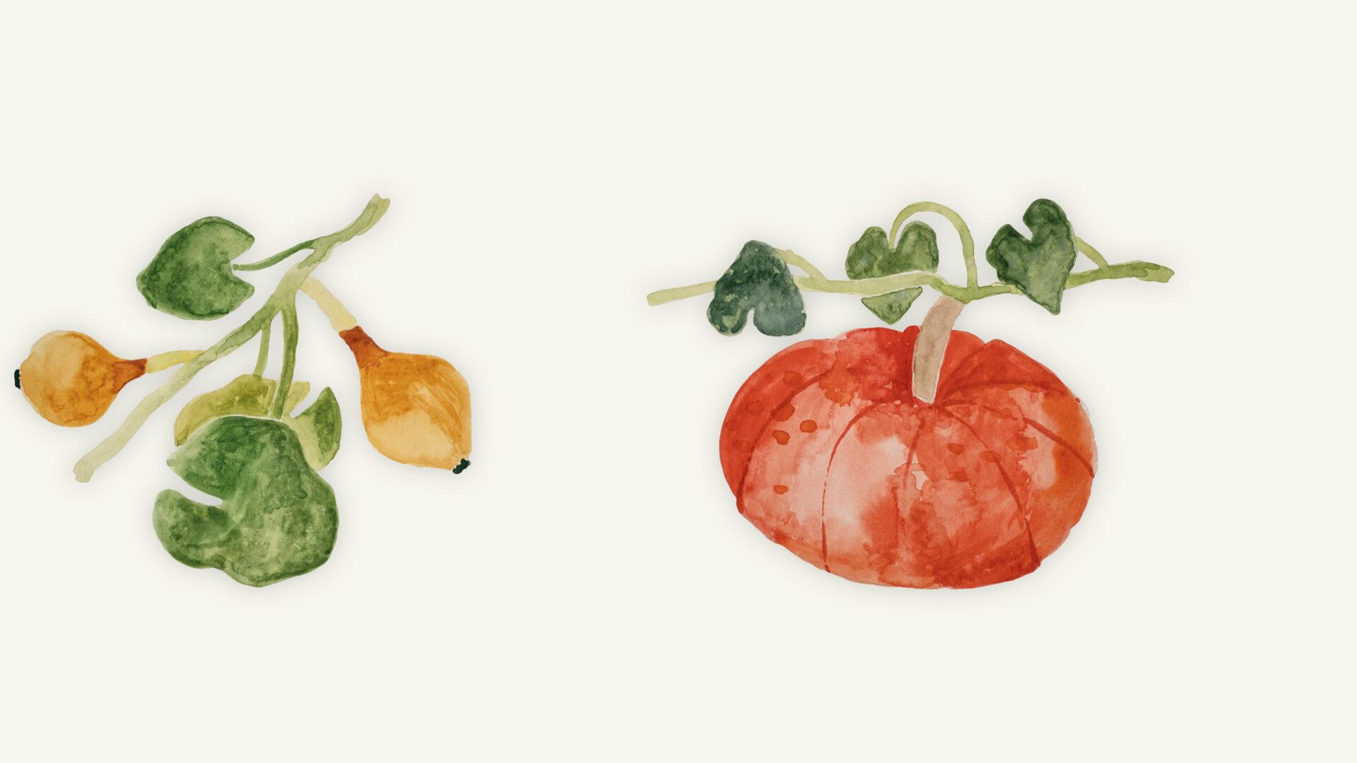 Wachstum Kürbispflanze