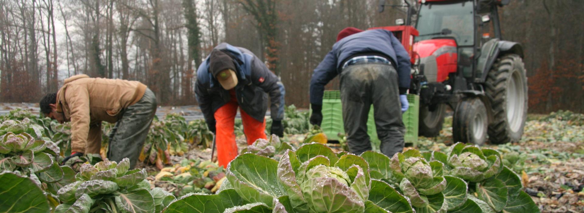 Feld Arbeit Winter