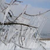 Frost Eiszapfen Am Ast