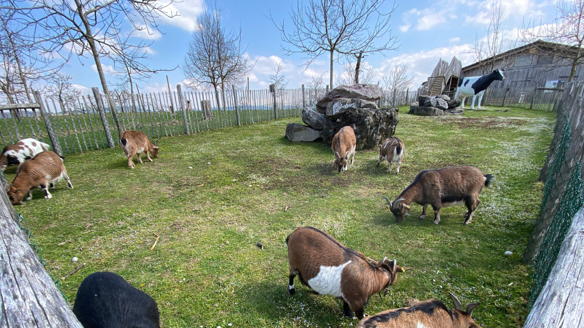 Ziegengehege Tierwohlsorgen