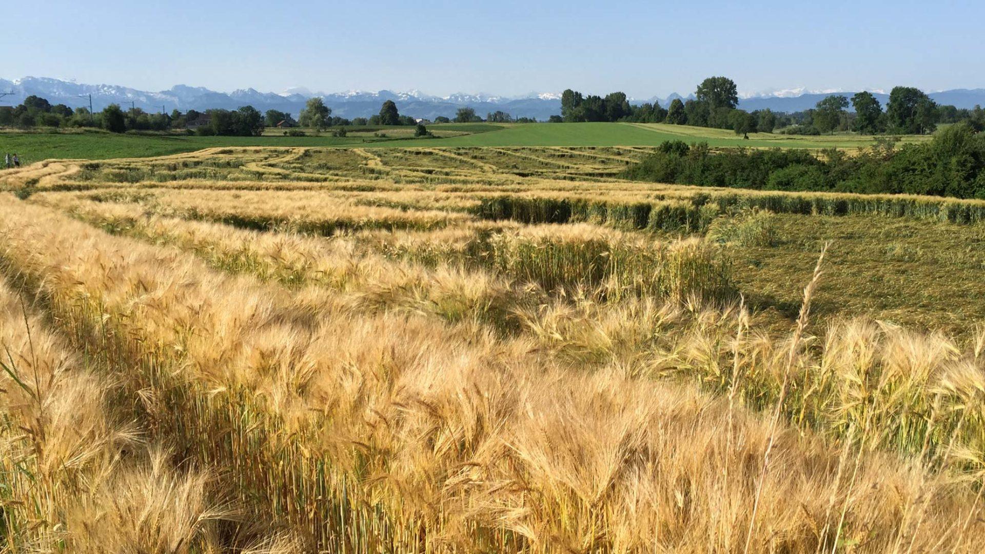 Getreidefeld mit Loch