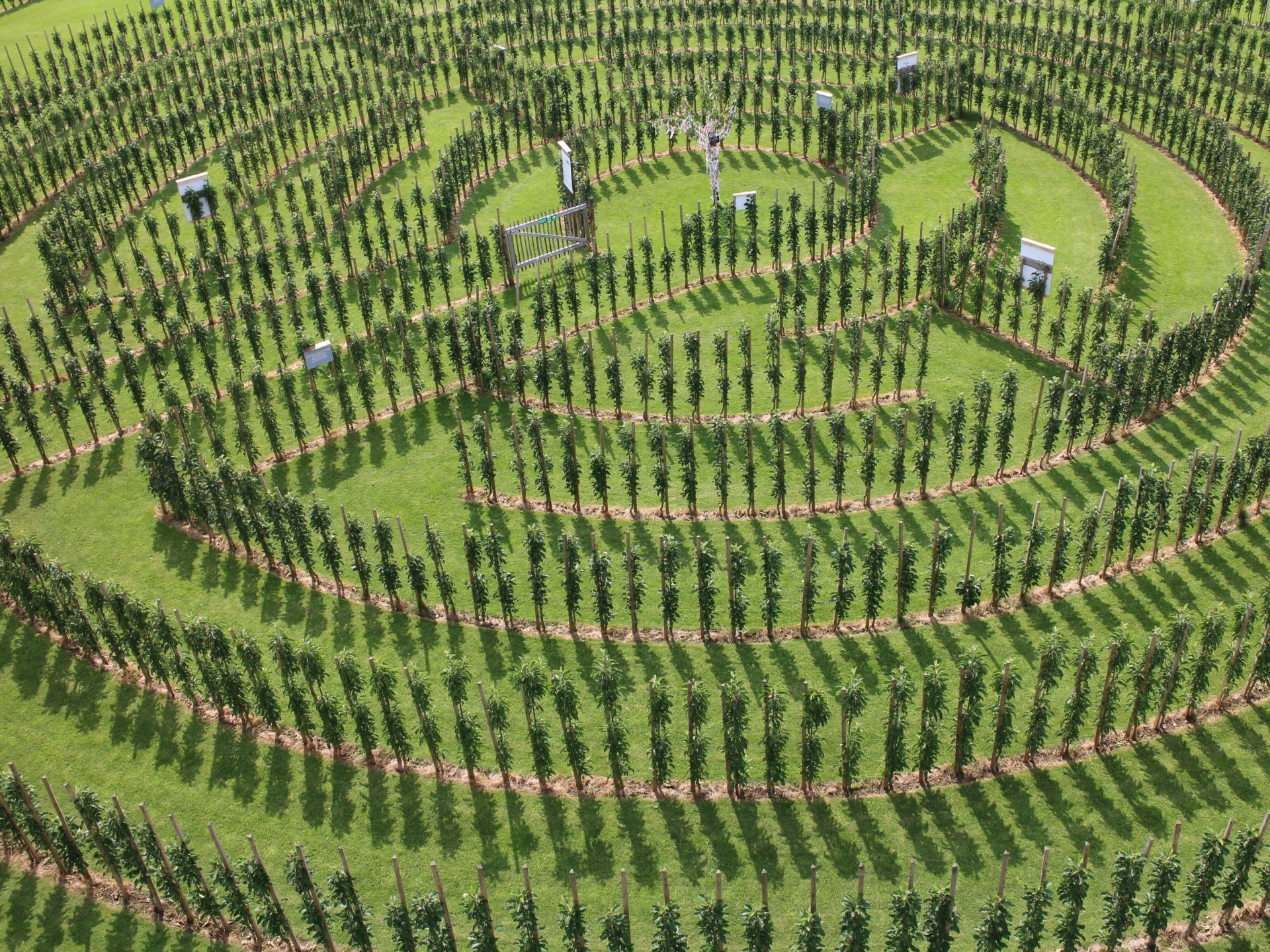 Juckerhof ÖpfelGarte Labyrinth
