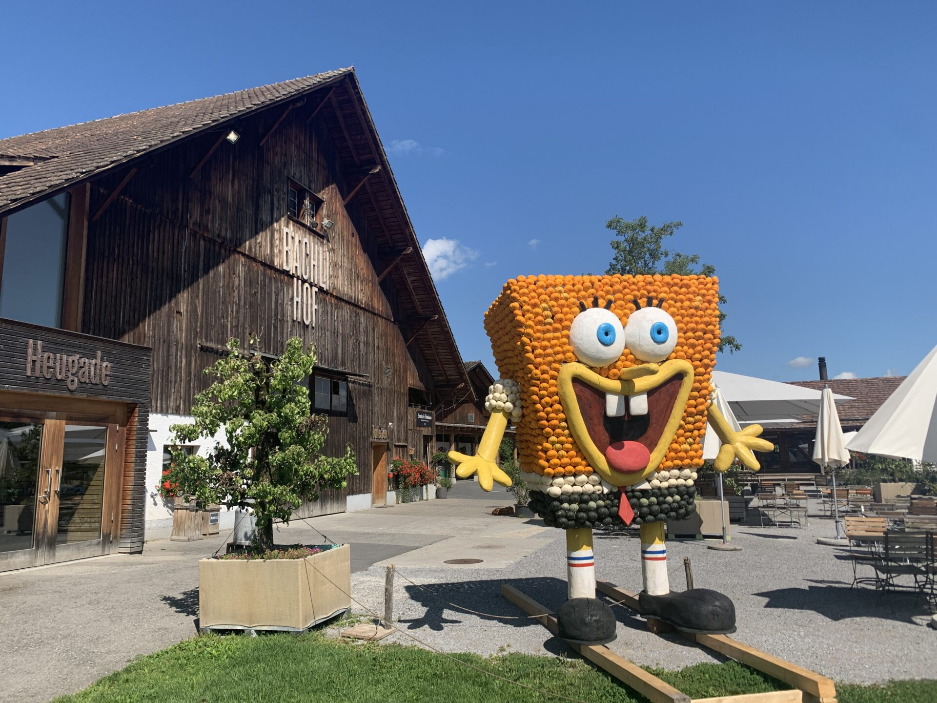 Kürbisfigur SpongeBob (5)