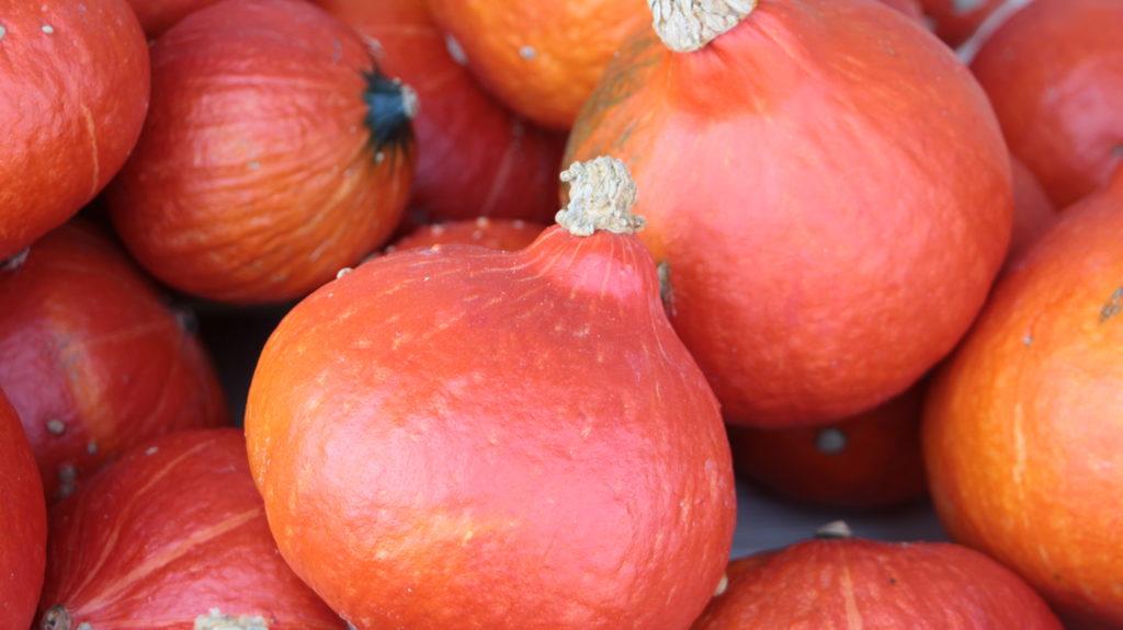 Orange Knirpse