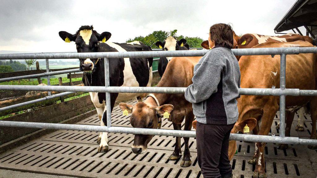 Bäuerin mit Kühen