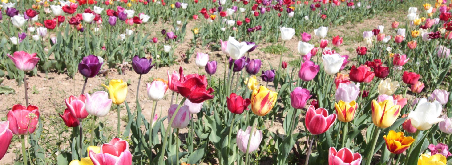 Römerhof Blumen