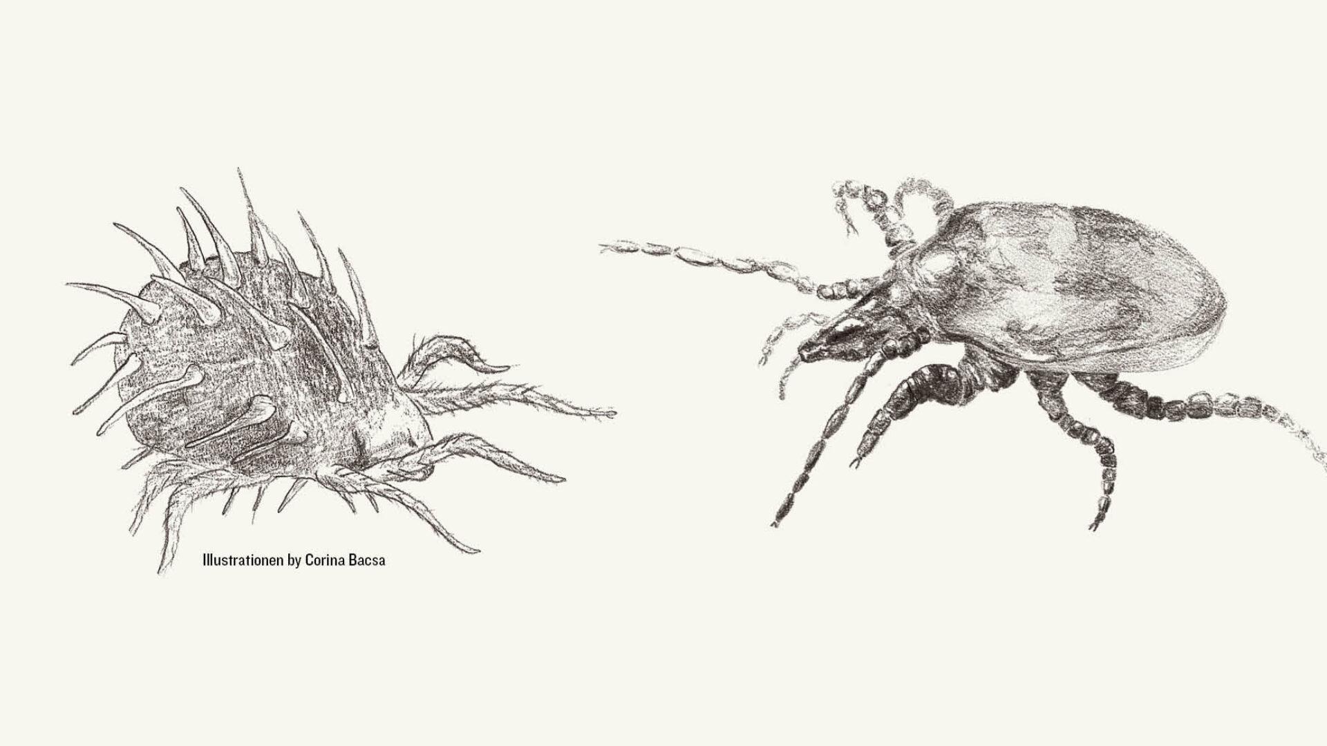 Spinnmilbe und Raubmilbe by Corina Bacsa