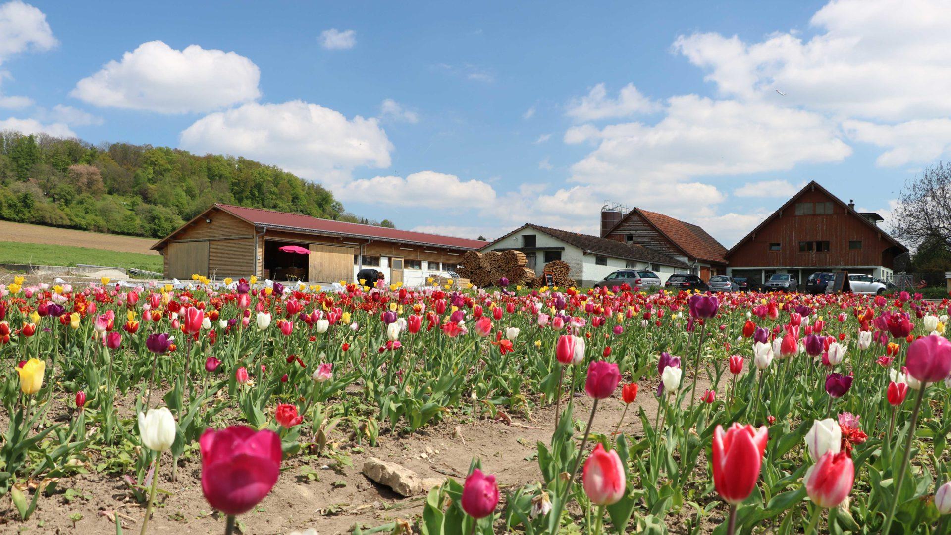 Roemerhof Mit Blumenfeld
