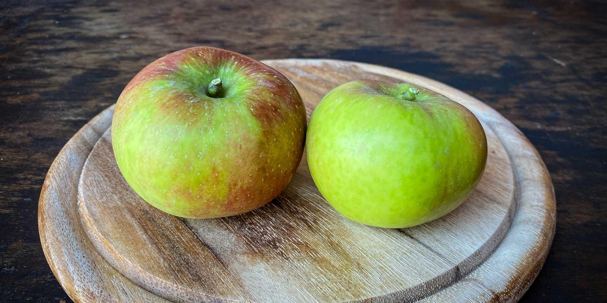 Apfelsorten 3: Rondo