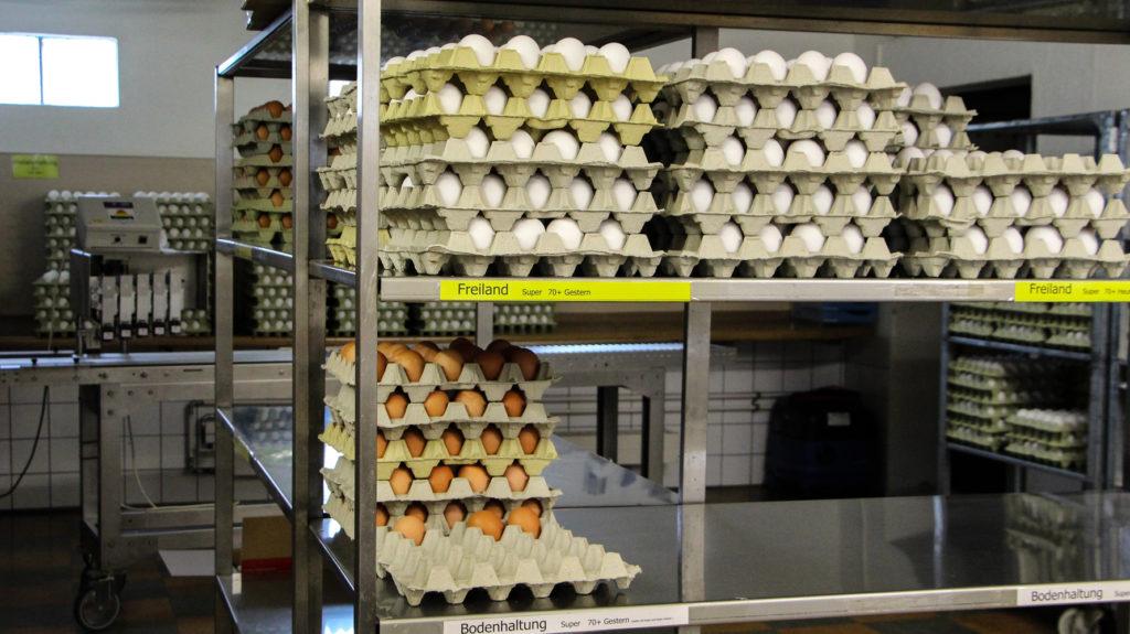 Sortierte Eier