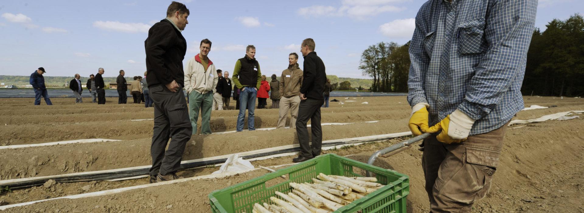Arbeit auf dem Feld Spargel Ernte