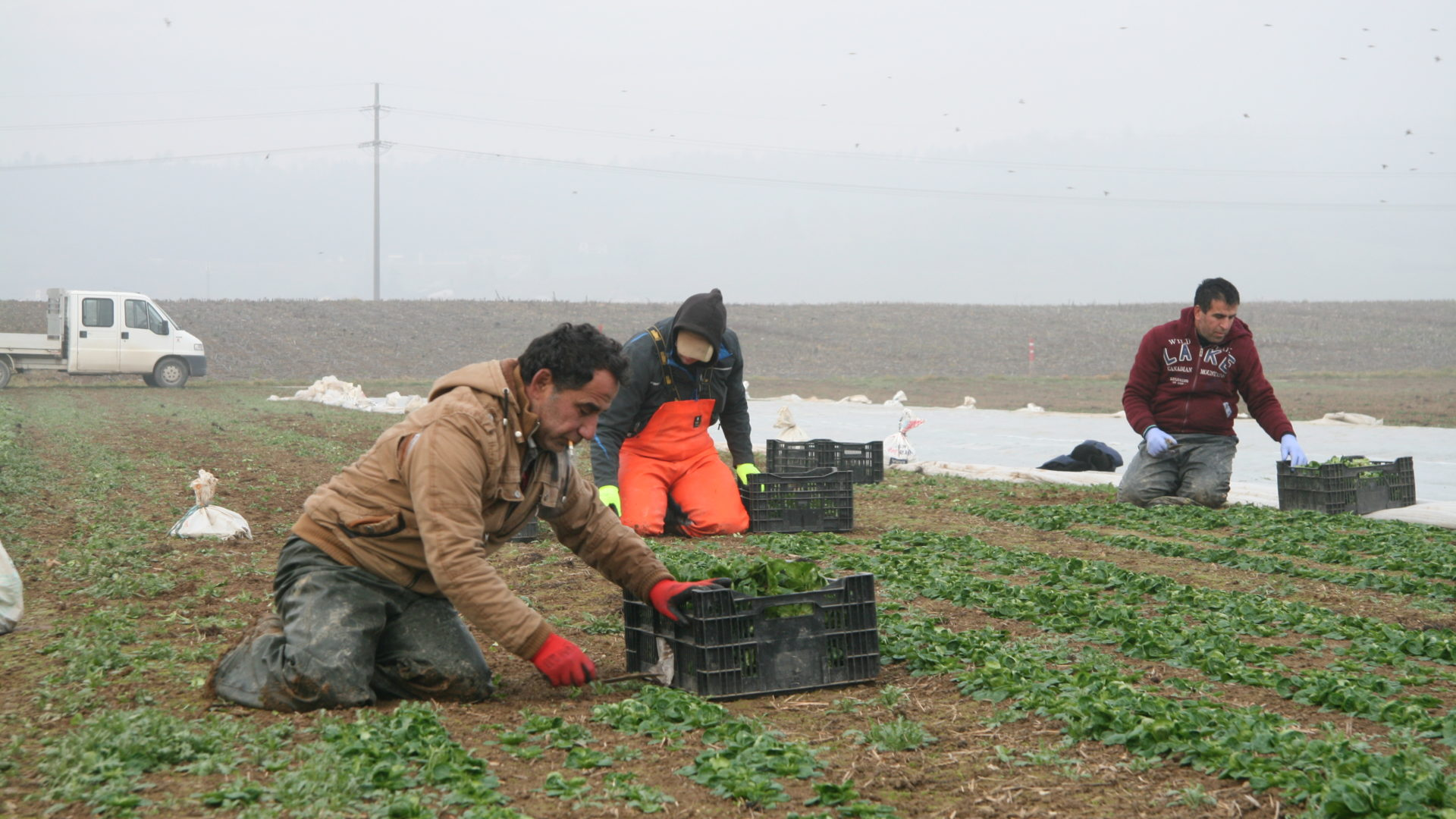 Trockenheit Landwirtschaft