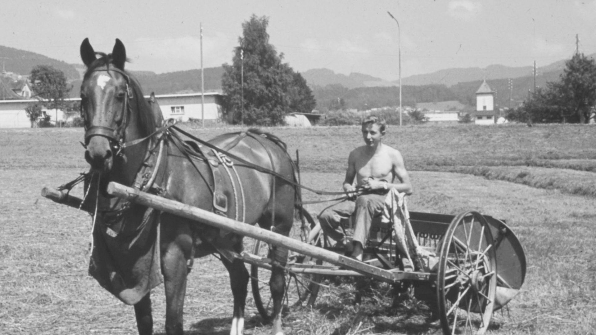 Mann mit Pferd auf Wagen