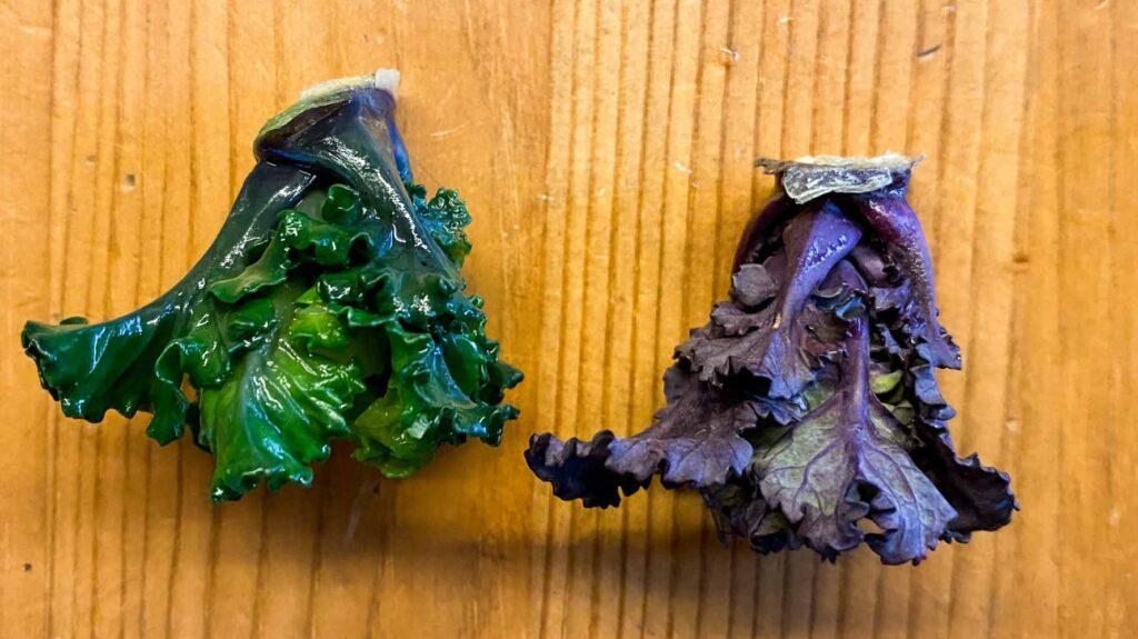 gekochte und rohe Flower Sprouts