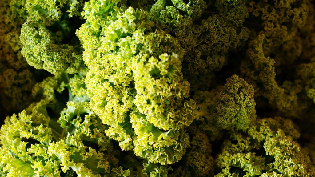 Kale alias Federkohl